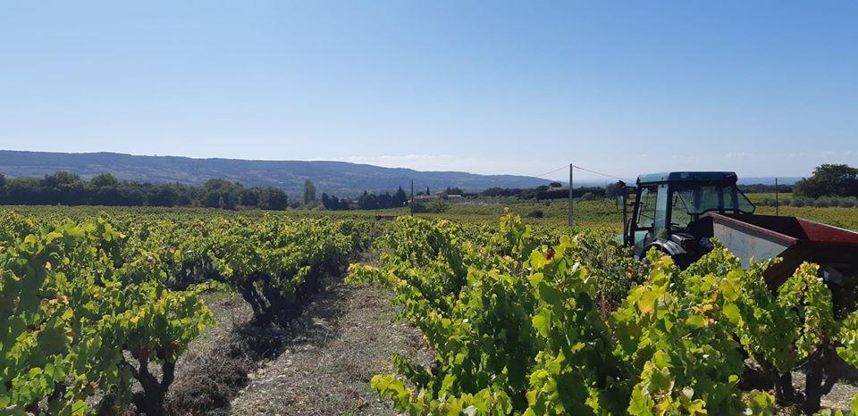Chasse au trésor vignoble Vaucluse